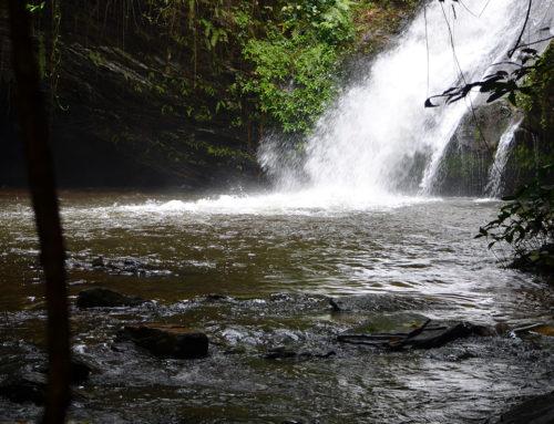 Durch den Urwald zum Wasserfall