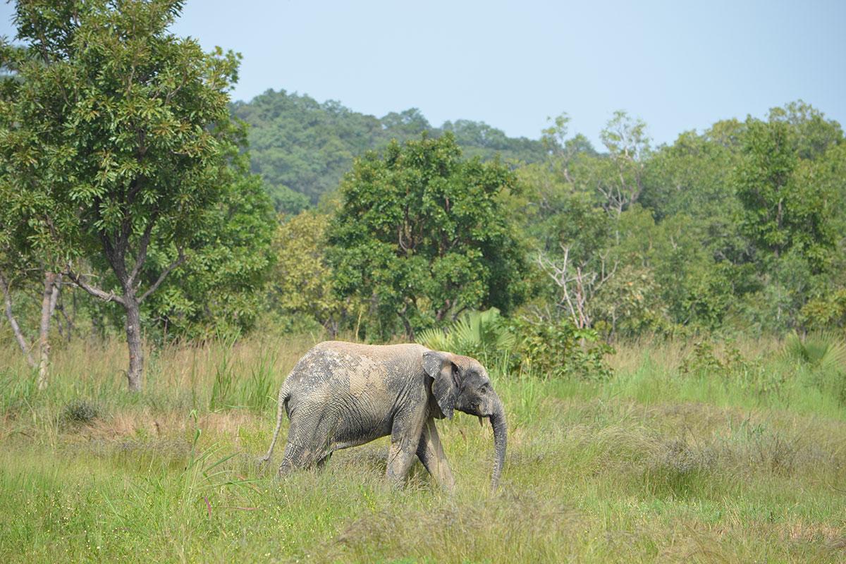 Elefantenpark Djamde