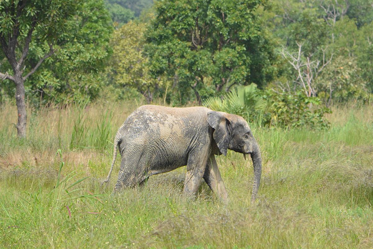 Elefant im Nationalpark von Djakpleme